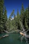 Bäume am Bow River in Banff