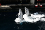 Delfine im Wasser