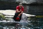 Ein Beluga-Wal der Geräusche macht