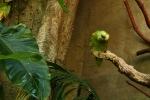 Huch? Ein Papagei.