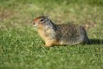 Ein Hörnchen auf der Hut