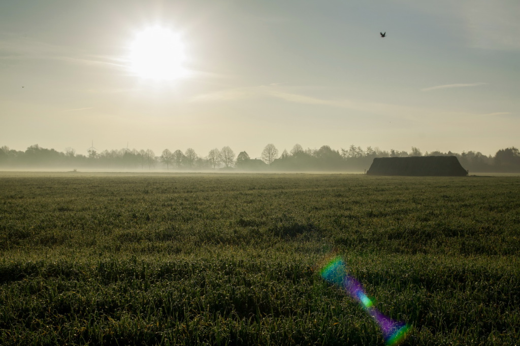 Novembermorgen am Niederrhein